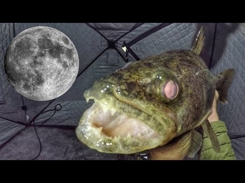 Ice Fishing Full Moon Walleye