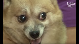 Ferocious Dog Makes Married Life A Hell For New Bride | Kritter Klub