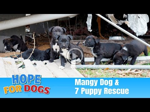 Hope Rescues 7 Puppies & Mangy Dog  The Dog Saviors