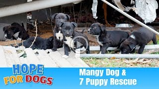 Hope Rescues 7 Puppies & Mangy Dog - The Dog Saviors
