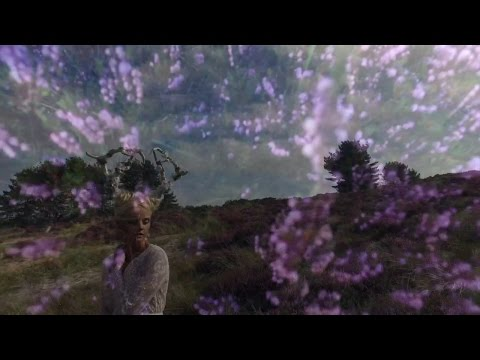 Purple Fields Magic