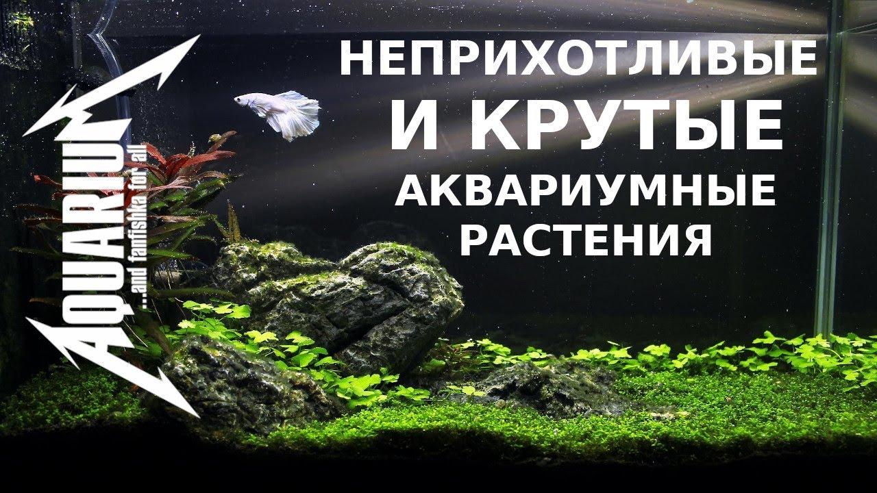 Неприхотливые и крутые аквариумный растения начинающих и медленных травников