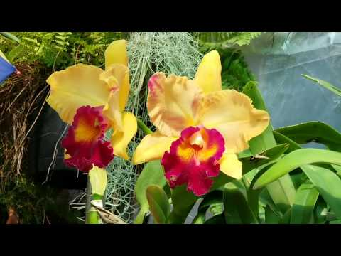 February 2019 Orchid And Garden Update  P1.