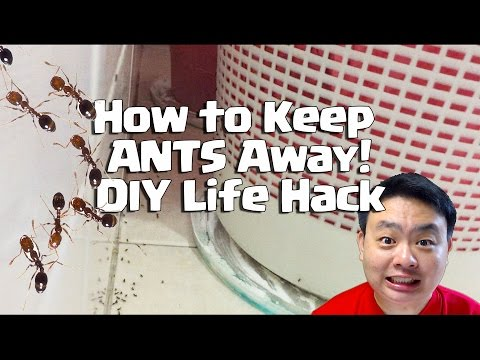 How to Keep Ants Away DIY Life Hack