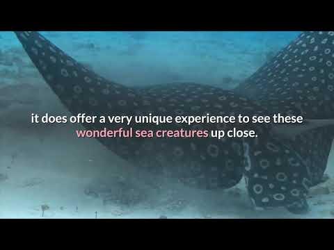 Travel: Scuba Diving at Grand Cayman Islands