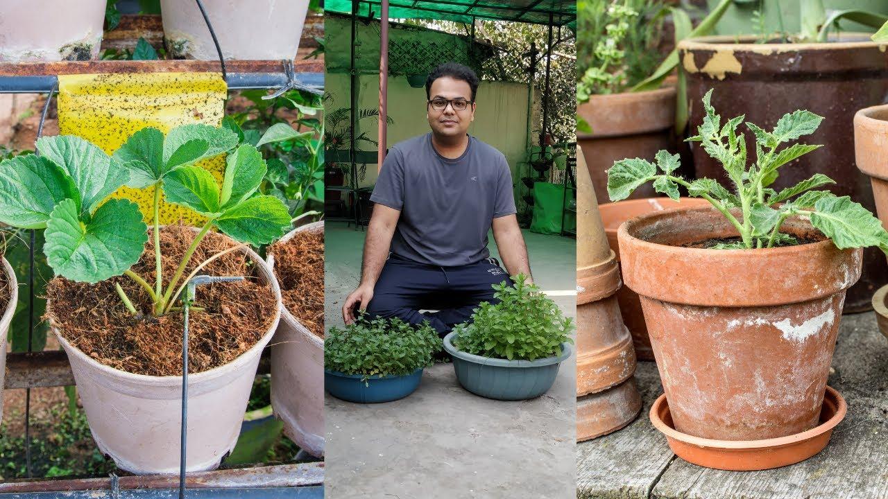 How to Start Gardening in Lockdown   Gardening in water   Without Seeds.