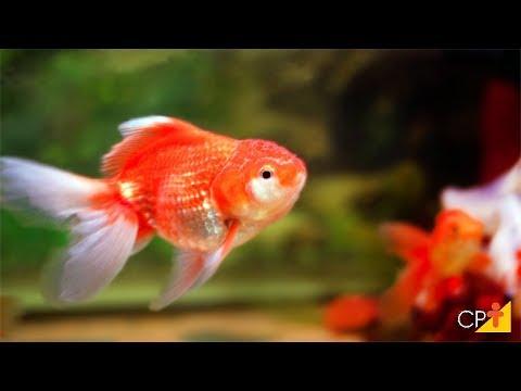 Clique e veja o vídeo Curso Produção de Peixes Ornamentais CPT
