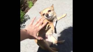 RIP VINE Compilation (Animal Edition) thumbnail