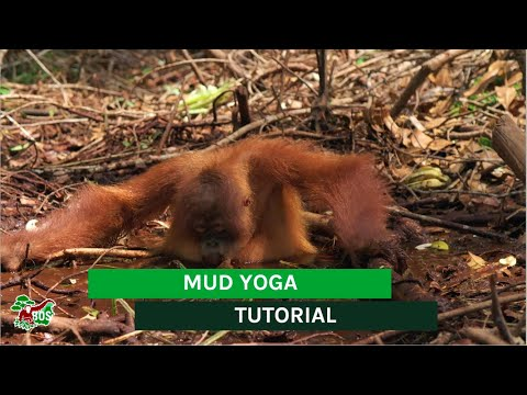 Mud Yoga Tutorial from YouTube · Duration:  1 minutes 4 seconds