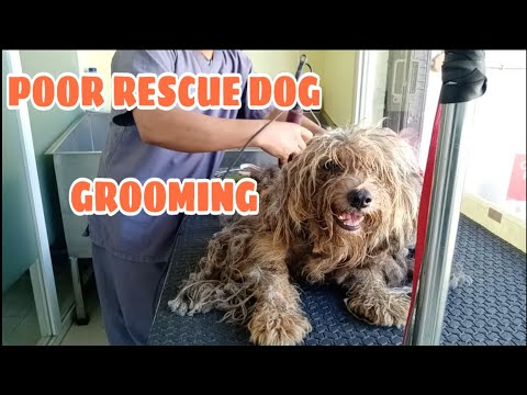 POOR RESCUE DOG GROOMING | SHAVEDOWN