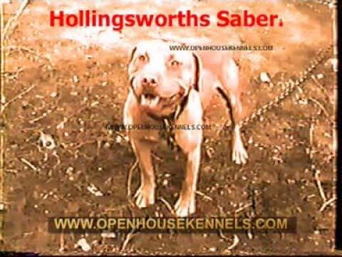 HOLLINGSWORTH DOGS