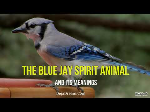 The Blue Jay Spirit Animal And Its Meanings