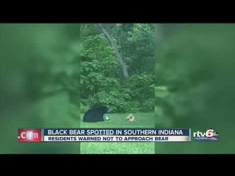 Black bear spotted in southern Indiana