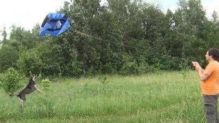 Воздушный змей для съемки фото видео с высоты (KAP)(Самодельный воздушный змей (кайт) FLOWFORM, для фото-видеосъемки. Бескаркасный, стабильный змей с большой подъе..., 2014-06-04T08:12:45.000Z)