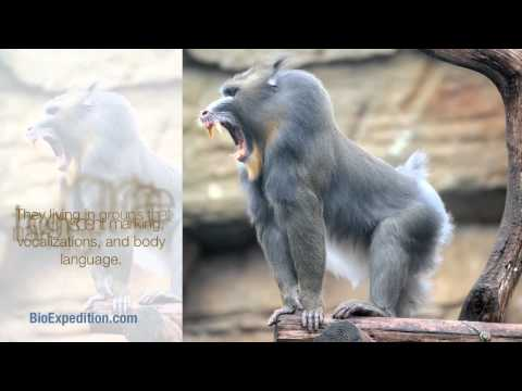 Information about Mandrill