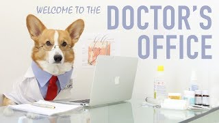 Topi The Doctor Dog