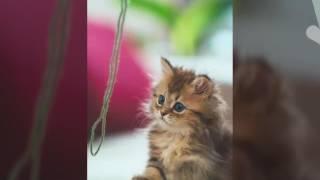 Кошки ( слайд шоу )