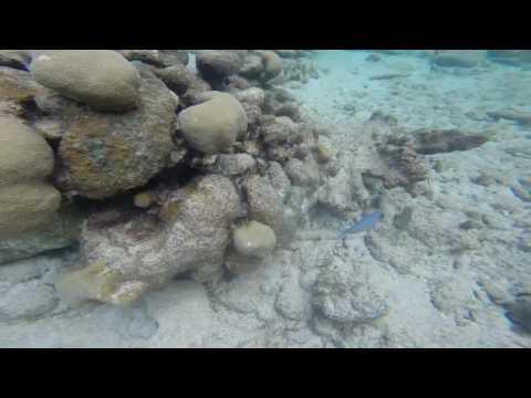 Coral Reefs and Wildlife - Culebra, Puerto Rico