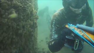 zıpkınla balık avı - karadeniz-2