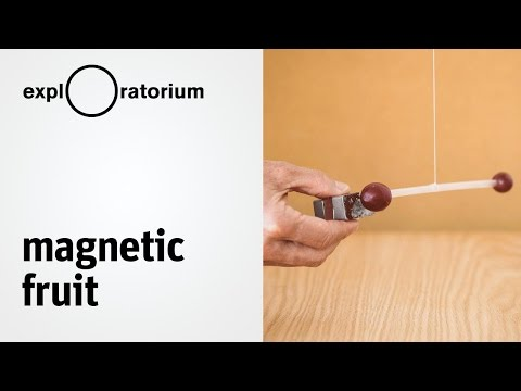 Explore diamagnetism and paramagnetism | Magnetic Fruit - Science Snack activity
