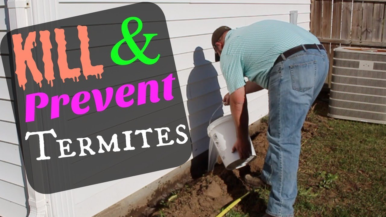 DIY | 10 Year Kill & Prevent Termites & Ants Easy At Home Method