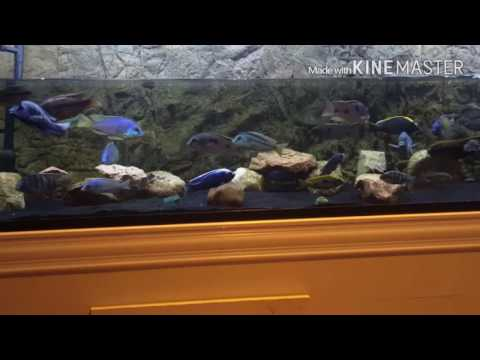 Male Or Female? How To Vent Your Fish.