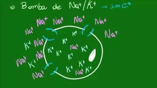 Membrana Plasmática - Transporte de Substâncias