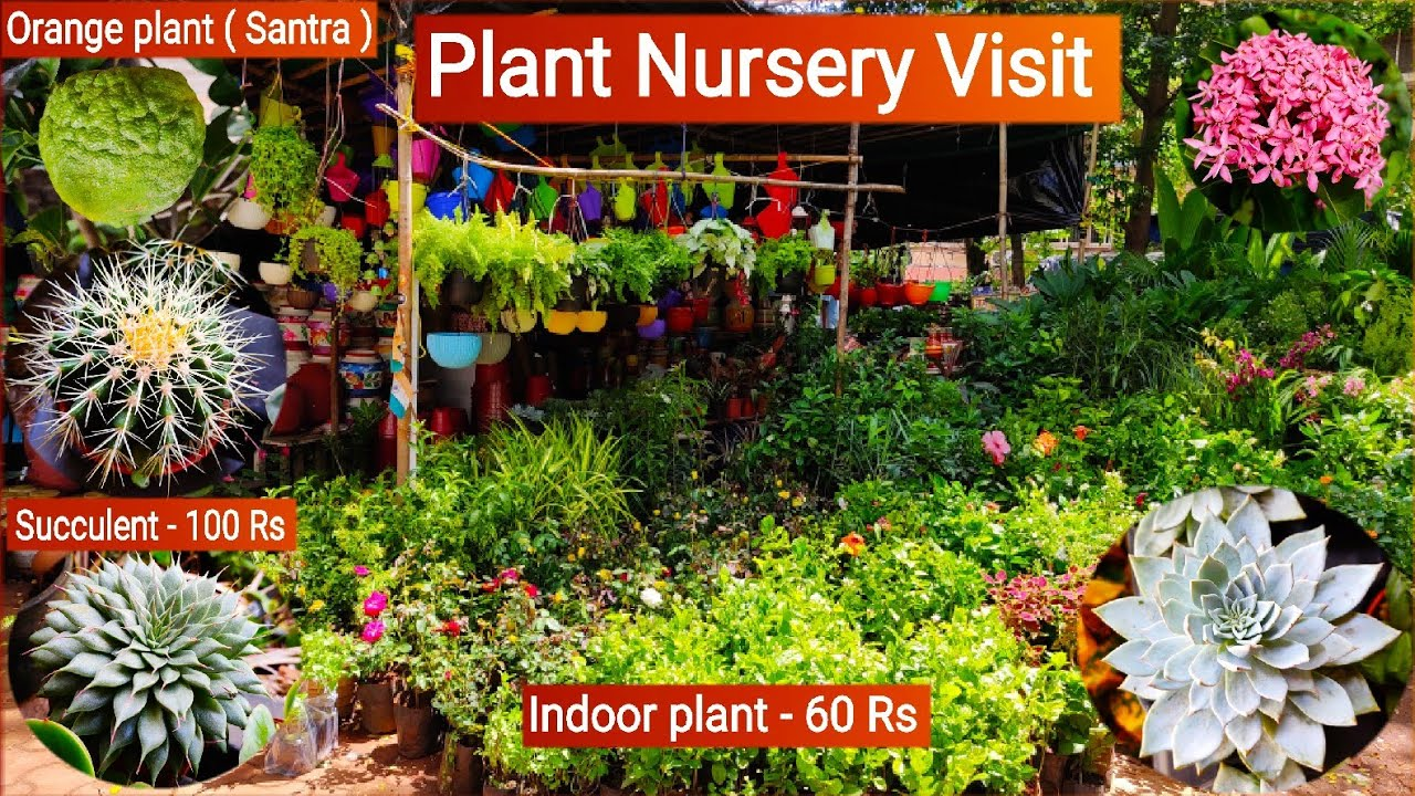 Plant nursery visit, Plant price with names || Succulent, cactus, Indoor plants|| Mukesh Nursery