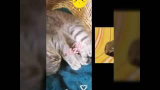 Красивые картинки с котами. 😀
