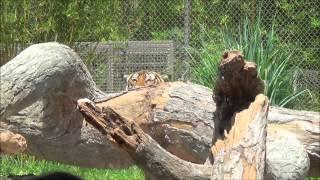 National Zookeeper Week 2014