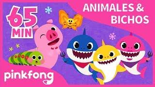 Las Mejores Canciones de Animales & Bichos | +Recopilación | Pinkfong Canciones Infantiles