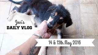 DAILY VLOG EP : 13 - RESCUING TWO CUTE STRAY DOGS || Jovi Hunter