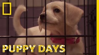 Crate Training Woes | Puppy Days