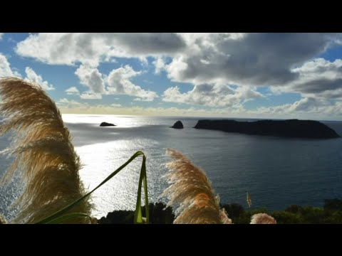 Livvys continuing New Zealand Adventure February to July 2015