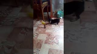 Отучаю собаку от уничтожения обоев!