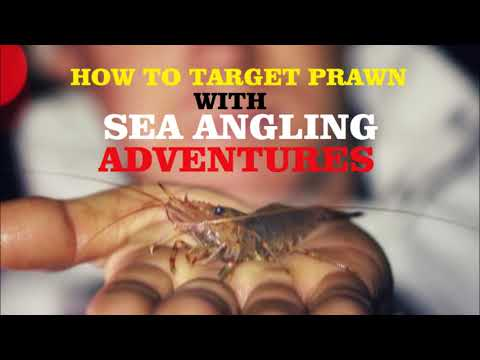 Prawn collecting with Sea Angling Adventures