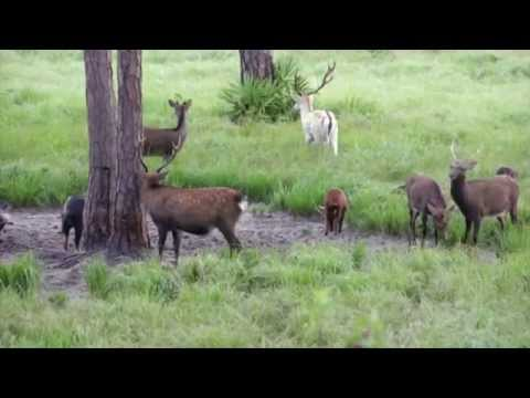 Bang 57 Ranch - 277 +/- Acre Hunting Land And Ranch FOR SALE