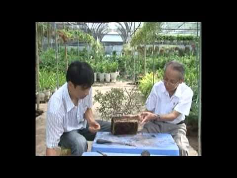 vietbonsai.vn: Kỹ thuật trồng cây và chăm sóc cây cảnh - p4