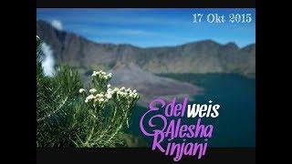 Lagu Edelwies Bunga Gunung Kami