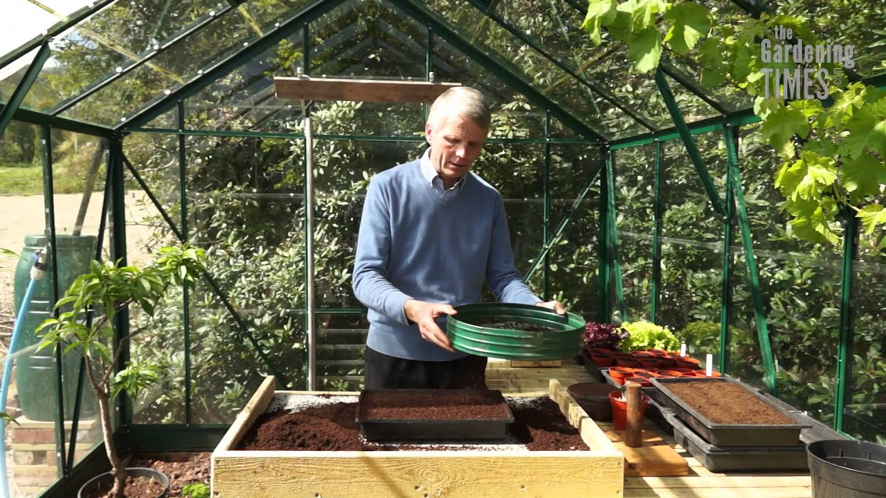 how to start broccoli from seed