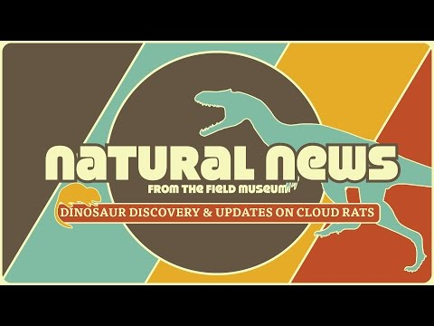 Dinosaur Discovery & Updates on Cloud Rats   Natural News from The Field Museum   Ep. 1