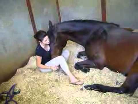 How to jerk off a horse from YouTube · Duration:  15 minutes 25 seconds