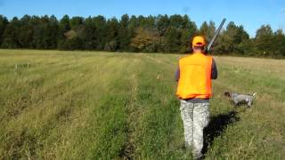 Quail Hunt,  October 22, 2012, Rose Hill Game Preserve, Culpeper, Va