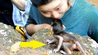 Tourist girls make baby Maci looking very strange, adorable baby monkey Maci Video
