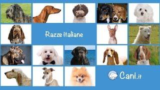 Cani di razza italiani