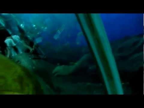 Singapore Aquarium Divers Underwater!!!