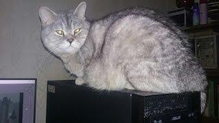 С Международным Днем Кошек! (Видео с мобилы).