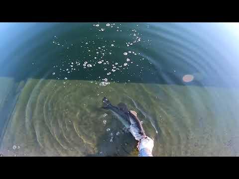 Fishing El Dorado Park Searching For Trout