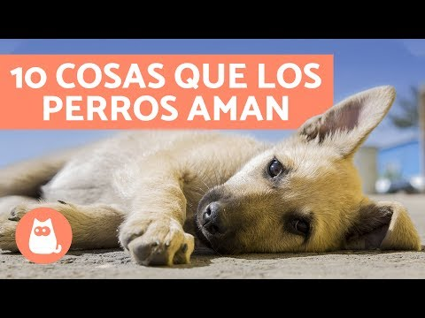 10 cosas que los perros AMAN