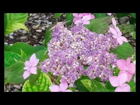 Una Mattinata Speciale All 39 Orto Botanico Giardino Dei